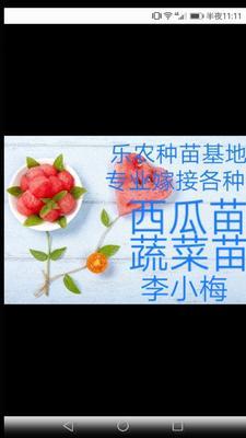 安徽省宿州市埇桥区甜王苗