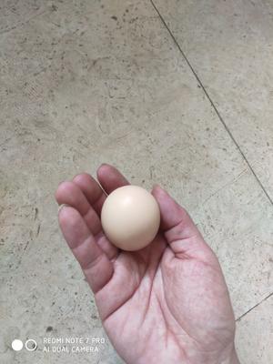 这是一张关于土鸡蛋 食用 箱装 的产品图片