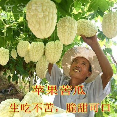 苹果苦瓜种子  袋装 十粒一袋