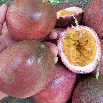 紫色百香果 80 - 90克
