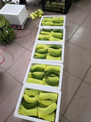 威廉斯香蕉 八成熟