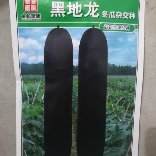 冬瓜种子 黑皮冬瓜  专用于销售现瓜  单瓜重  产量高