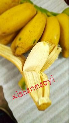 米蕉 七成熟