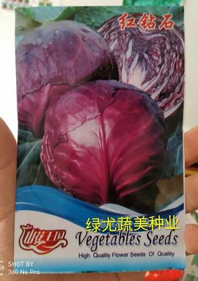紫甘蓝种子 圆球型紫色甘蓝,别名红甘蓝,赤甘蓝,紫包菜。