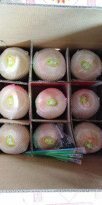 椰青 2 - 2.5斤