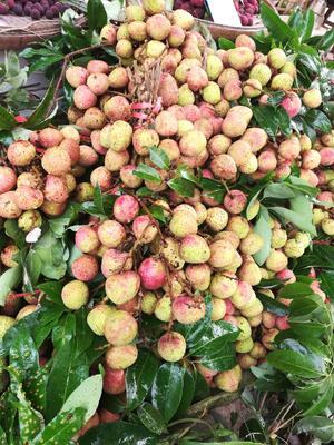 广西灵山县三月红荔枝非常甜一件代发!5斤10斤包邮