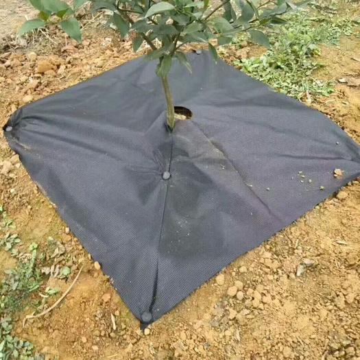 生态防草布透气透水保湿保肥,可以改善土壤,增加突然微生物含量