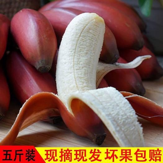 红香蕉 火龙蕉生蕉发货无催熟剂泡沫箱+真空净重5斤装包邮