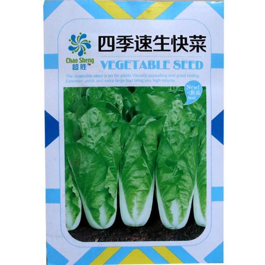白菜种子 aa超胜 四季速生28天快菜种子 庭院蔬菜种子批发 青菜种子