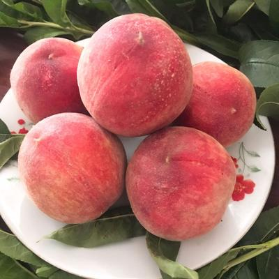 水蜜桃子毛桃5斤装非油桃黄桃新鲜采摘现货