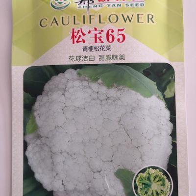 白面青梗花菜种子 松宝65,花球洁白,白面青梗松花种子7克