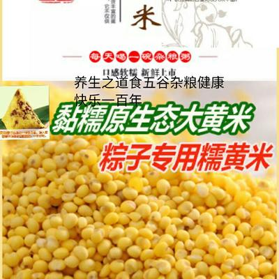 东北大黄米棕子米五谷杂粮养生米江黄米糯黄米5斤装包邮
