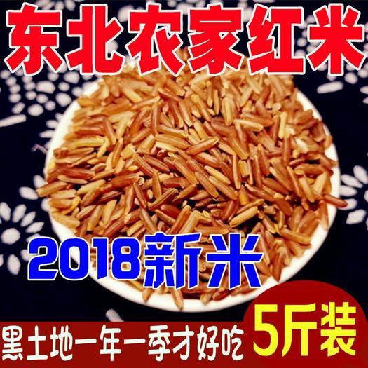 长粒红米 东北红糙米活着的红糙米养生食物5斤装包邮