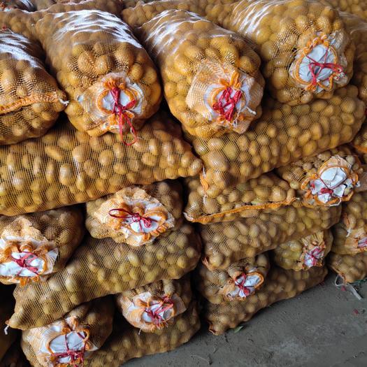 秋季土豆种子,优质,高产,抗病强!