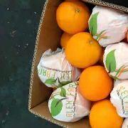 新鲜埃及橙子150元一箱,72个装。30斤包邮价格