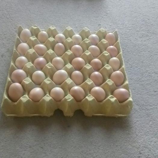 土鸡蛋   360个/箱