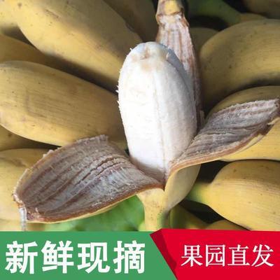 广西小米蕉9斤净重包邮新鲜香蕉水果酸甜非芭蕉皇帝蕉粉蕉批发