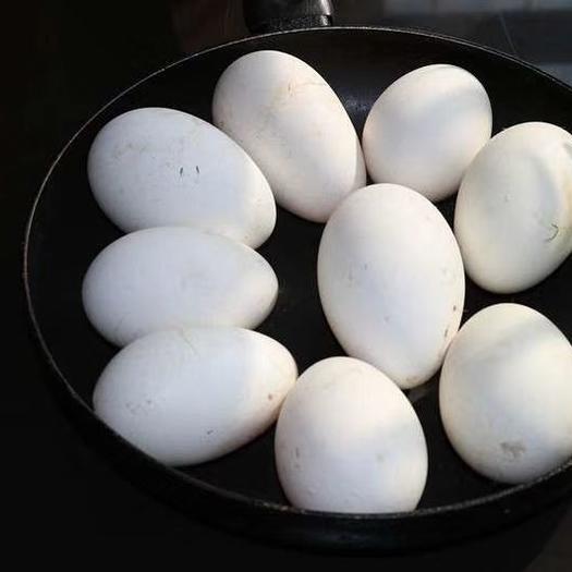 鲜鹅蛋 保质保量,散放,五谷杂粮喂养。确保常年有货。诚信经营。