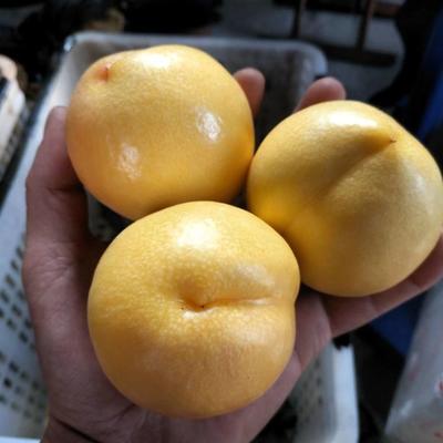 山东蒙阴露天黄油桃5斤1箱包邮
