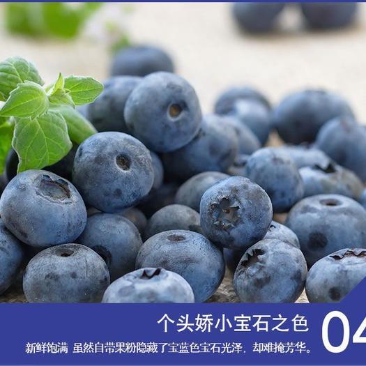 国产鲜果蓝莓新鲜时令水果顺丰包邮
