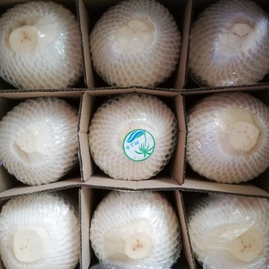 海南,天然椰青,树上水。有开椰器,厂里直销价。
