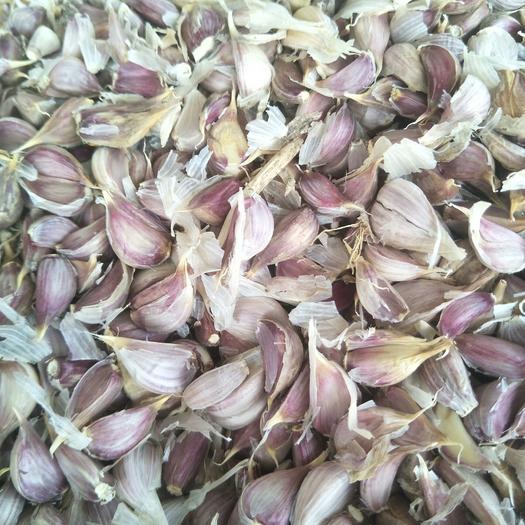 大蒜种子 红根蒜苗种子