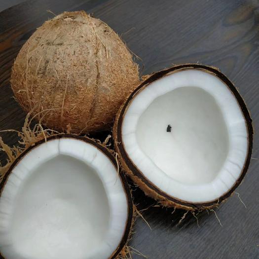 海南毛椰  老椰子