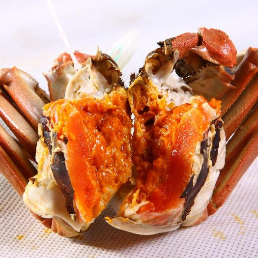 2.5两~3两大闸蟹