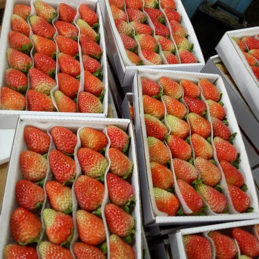 夏季草莓,基地直供,不断货