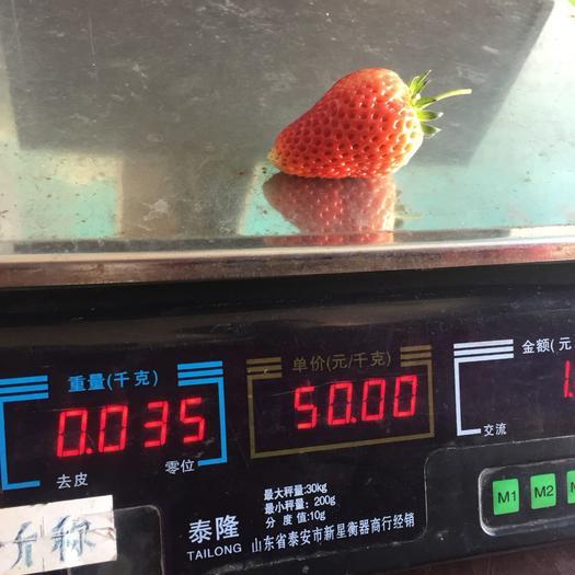 甜茶里草莓苗多少钱 好管理的甜查理草莓苗 自家育的草莓苗