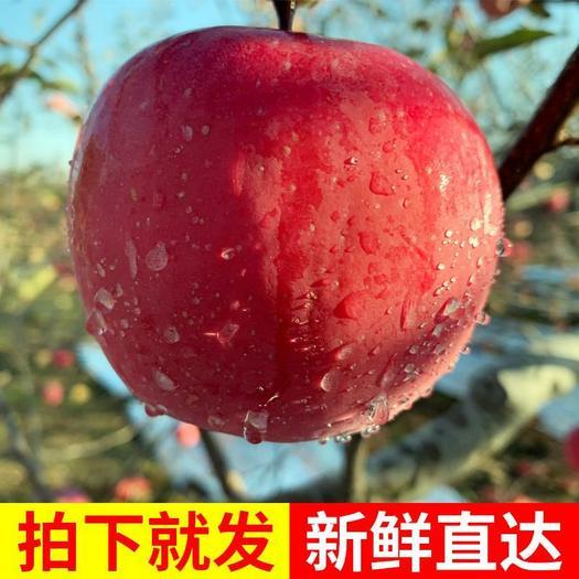 陕西嘎啦苹果现摘现发5斤10斤包邮新疆海南西藏不发货