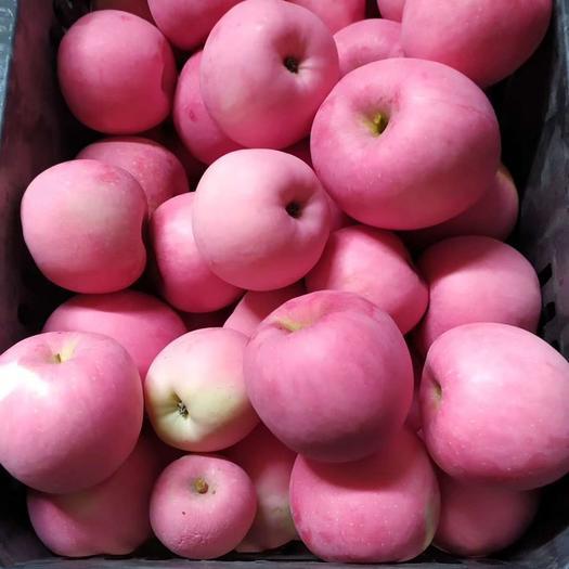 红将军苹果 新鲜富士下树了有想吃的没
