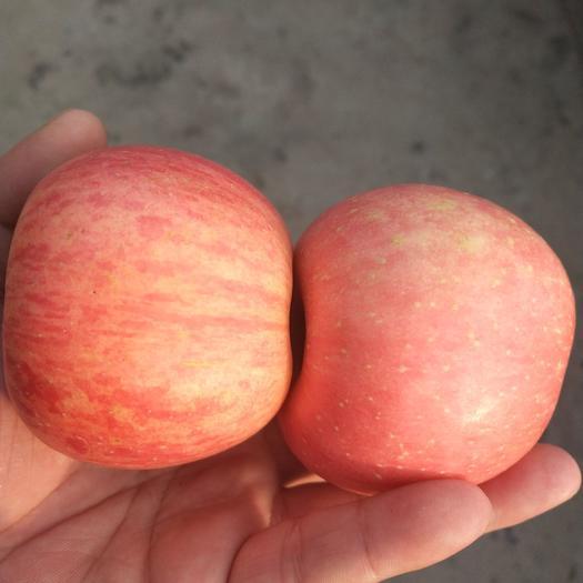 红富士苹果膜袋红富士苹果品种齐全,欢迎各地客商前来采购。