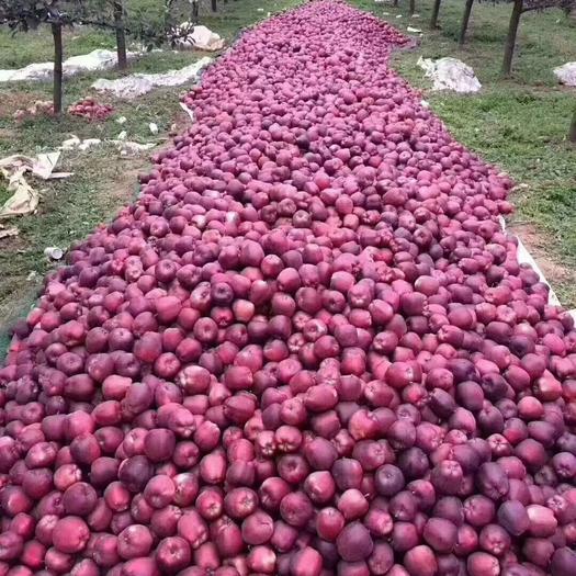 天水花牛苹果已成熟上市,一件也是批发价。现在火热销售中
