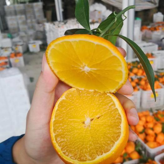 爱媛38号柑桔 现在爱媛38号柑橘果冻橙,支持一件代发,量大优惠