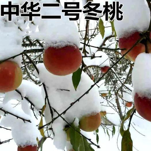 冬桃苗 嫁接晚熟品种 个大脆甜 当年即可结果