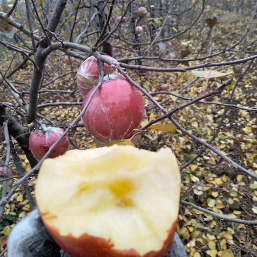 红富士苹果产地直销75左右无伤无疤