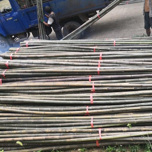 毛竹 大量出售香蕉竹长期供应合作