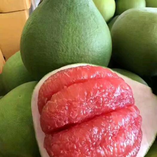泰国红宝石柚苗 【推荐】甜度高 口感好 保纯度 包成活 基地现挖直销