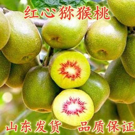 红心猕猴桃苗 品种齐全 南北方均可种植 包成活包品种