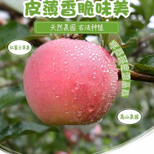 【坏果包赔】脆苹果水果新鲜红富士苹果整箱5/10斤冰糖心丑