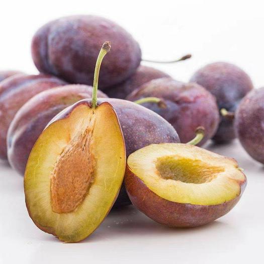 西梅苗 法兰西保品种质量 高产 包成活 甜度高 基地现挖直销