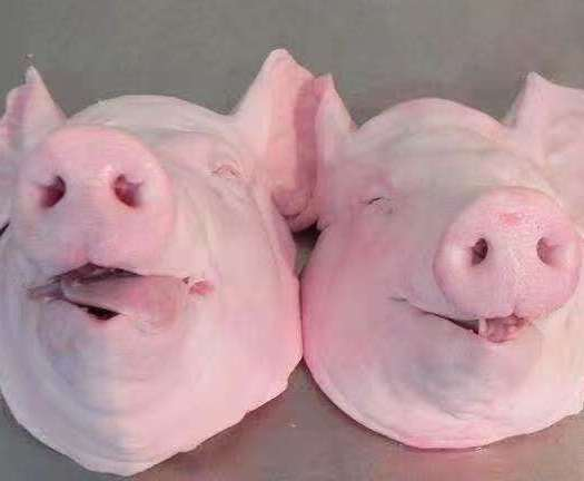 猪头 带耳猪头 猪头肉 正关进口猪头中的王者