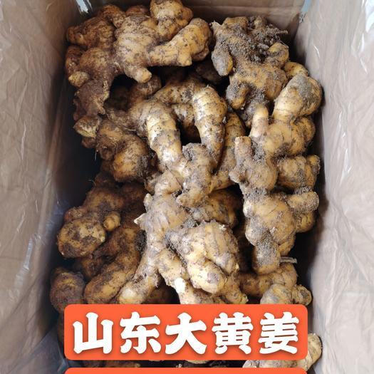大黄姜 原产地直供山东安丘精品地摊畅销货源 全国发货