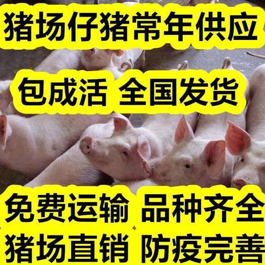 三元仔猪  猪苗等大型养猪厂直供 免费送猪 品种齐全防疫到位,