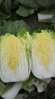 湖南省岳阳市君山区超级黄心菜