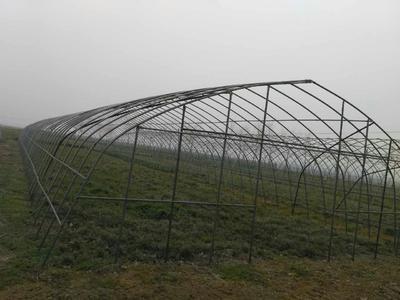 湖北襄樊襄城区钢管大棚