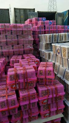 上海闵行泰国龙眼 15mm以上