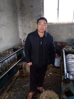 江西省宜春市丰城市野生山茶油 5L