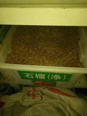 江苏南京江宁区石榴种子 0.8 - 1斤